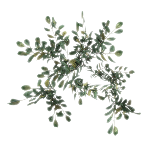 SampleLeaves_2.png