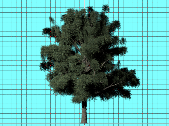 A_Tree_by_alanthegamer_Free3D_e4_POV_scene_Scaled_w560h420q10.png
