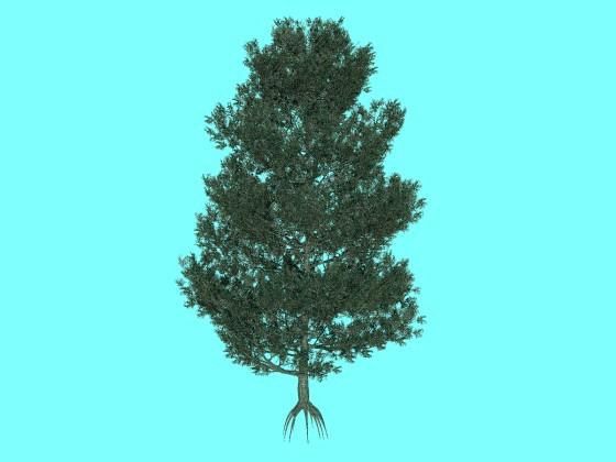 樹高が4mのビショップ松