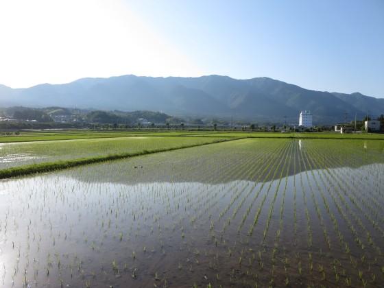 2018-06-02_1652_水田に映る比良の山並み_IMG_1066_s.JPG