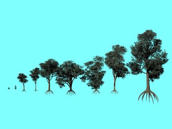 XfrogPlants Blue-Gum Eucalyptus
