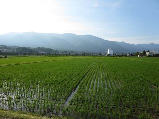 2018-06-22_1704_緑の水田と比良の山並み_IMG_1264_s.JPG