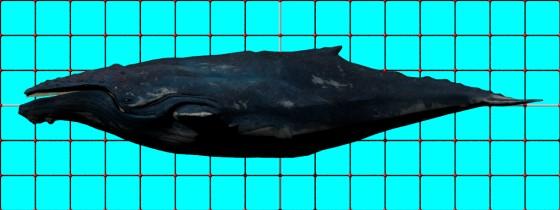 Baleen_Whale_CadNav_e1_POV_scene_w560h210q10.jpg