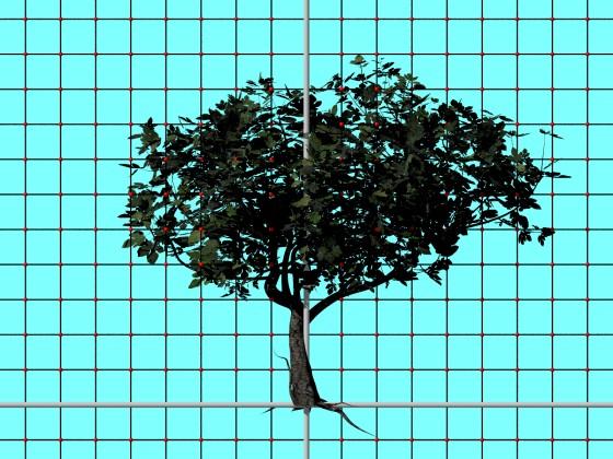 Tree_Ficus_Carica_N280518_e1_POV_scene_w560h420q10.jpg
