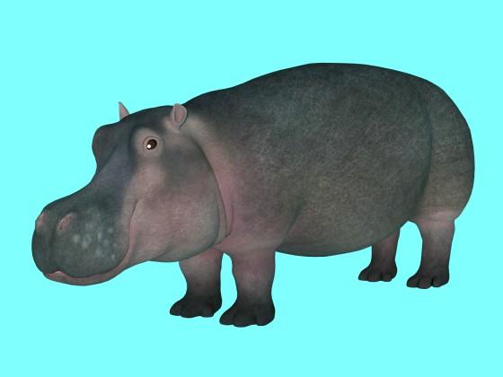 Hippopotamus Amphibius Rig
