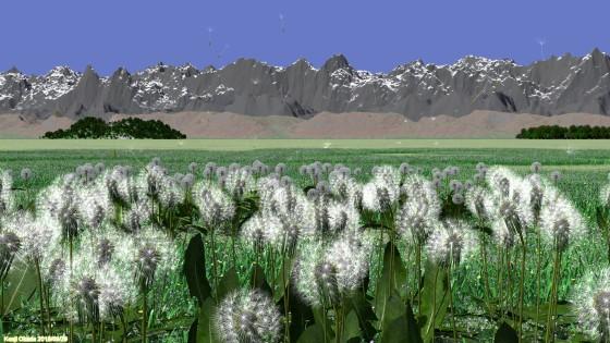 タンポポの綿毛の飛ぶ風景