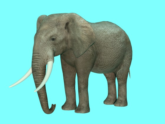 3D Elephant by ergin3d