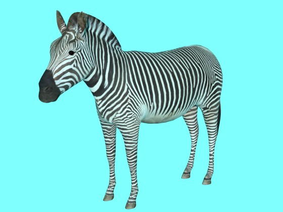 3D Zebra by ergin3d