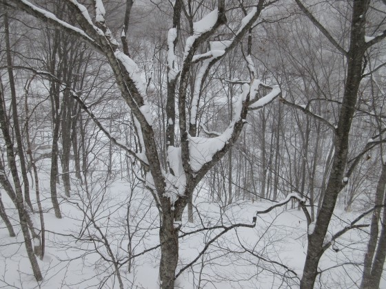 2019-01-24_1435_ハンの木高速ペアリフトからハンの木の大木に積もった雪_IMG_6741_s.JPG