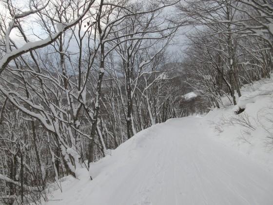 2019-01-24_1545_白樺ゲレンデからハンの木コースへの林道_IMG_6742_s.JPG