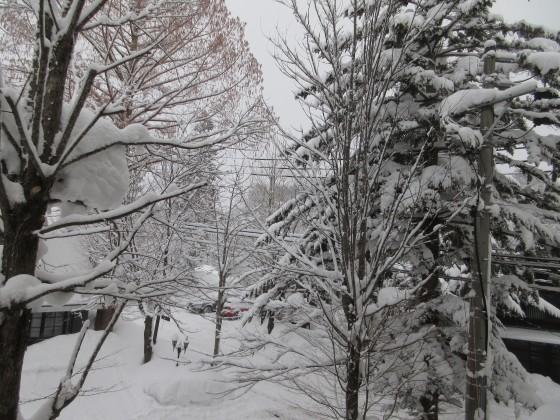 2019-01-26_0730_窓の外の雪_IMG_6787_s.JPG