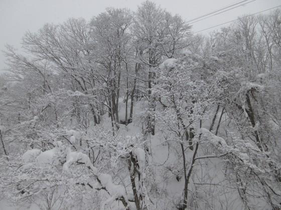 2019-01-26_0829_白樺クワッドリフトから雪の木々_IMG_6791_s.JPG