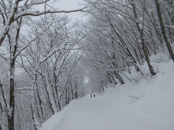 2019-01-26_0925_白樺ゲレンデからハンの木コースへの林道_IMG_6793_s.JPG