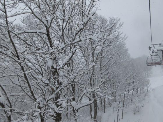 2019-01-26_0956_ハンの木第1クワッドリフトから雪の木々_IMG_6797_s.JPG