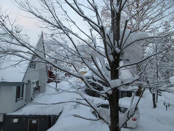 2019-01-27_0658_窓の外の木に積もった雪_IMG_6806_s.JPG