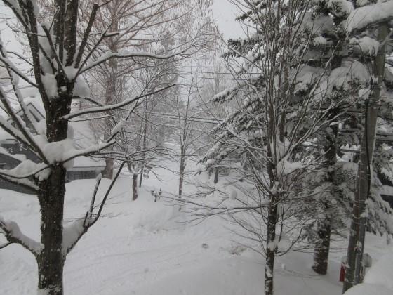 2019-01-29_0744_窓の外の雪_IMG_6868_s.JPG