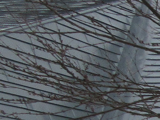 2019-02-19_0650_窓の外の雪の状態_IMG_7290_ts.JPG