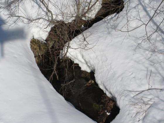 2019-02-22_0851_ハンの木第3クワッドリフトから見た沢の流れ_IMG_7316_s.JPG