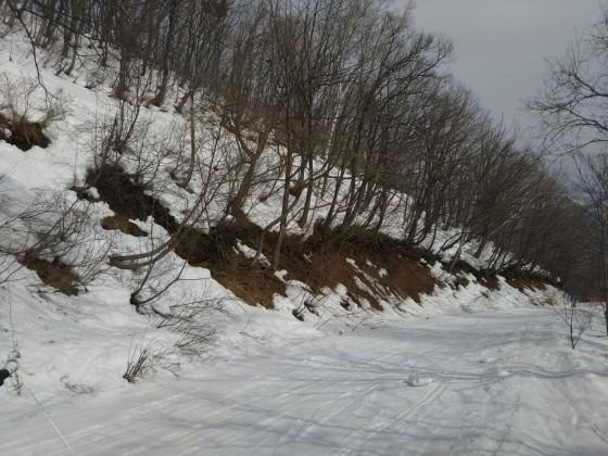 2019-02-27_1346_ハンの木コース下部から白樺ゲレンデ下部へ向かう林道の雪解け_DSC_0138_s.JPG