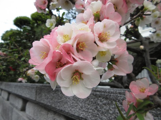 2019-03-28_1027_ボケ_IMG_7697_s.JPG