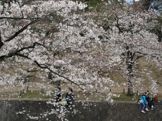 2019-04-02_1230_サクラ_IMG_7785_s.JPG