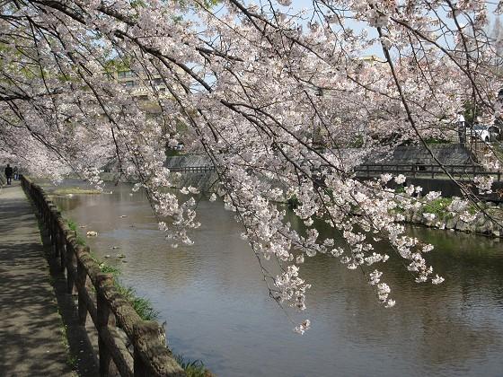 2019-04-07_0955_庄下川・桜_IMG_7955_s.JPG