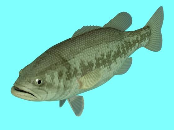 Freshwater Black Bass