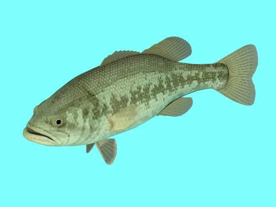 Freshwater_Black_Bass_Left_e1_w560h420q10.jpg