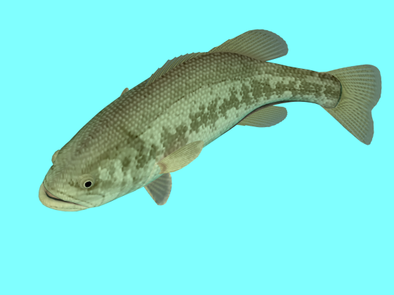 Freshwater_Black_Bass_Left_more_e1_w560h420q10.png