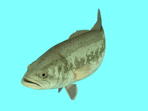 Freshwater_Black_Bass_Right_e1_w560h420q10.jpg