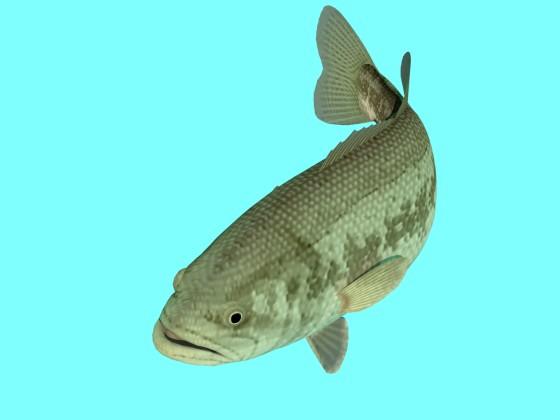 Freshwater_Black_Bass_Right_more_e1_w560h420q10.jpg