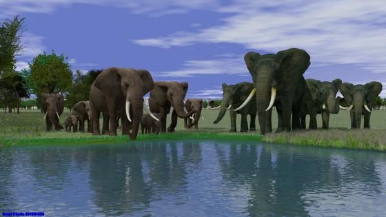 ゾウの群れ(2)