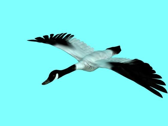 GOOSE_e1_Gull_w560h420q10.jpg
