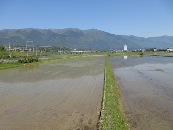 2019-05-11_0946_比良の山並みと田植えの終わった田んぼ_IMG_8446_s.JPG