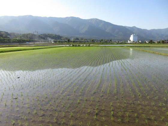 2019-05-22_1649_比良の山並みと水田_IMG_8655_s.JPG