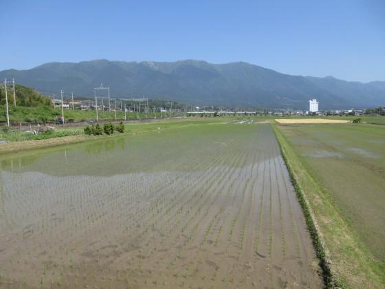 2019-05-24_0931_比良の山並みと田圃_IMG_8656_s.JPG