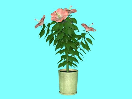hibiscus_fbx_obj_e3_Pink_w560h420q10.jpg