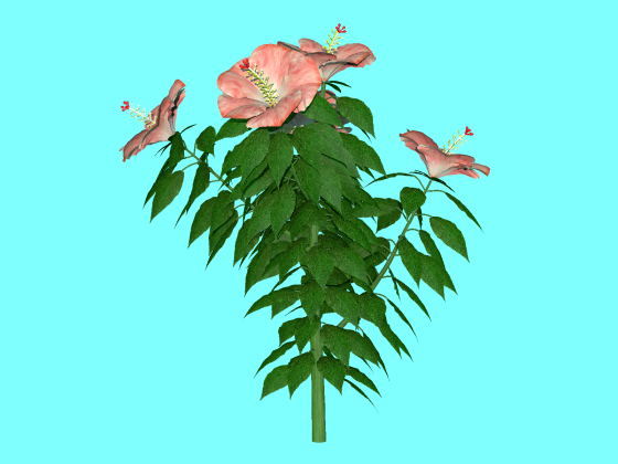 hibiscus_fbx_obj_e3_Pink_without_Vase_w560h420q10.png