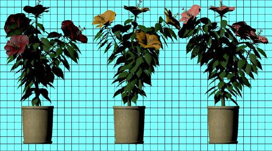 hibiscus_fbx_obj_e3_POV_scene_w560h310q10.jpg