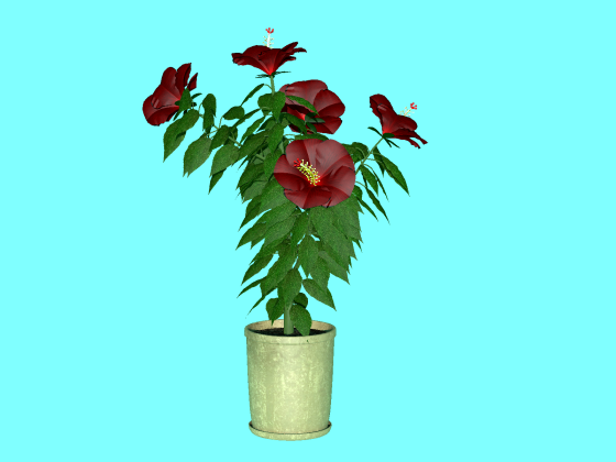 hibiscus_fbx_obj_e3_Red_w560h420q10.png