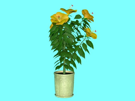 hibiscus_fbx_obj_e3_Yellow_w560h420q10.jpg
