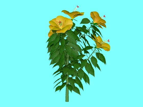 hibiscus_fbx_obj_e3_Yellow_without_Vase_w560h420q10.jpg