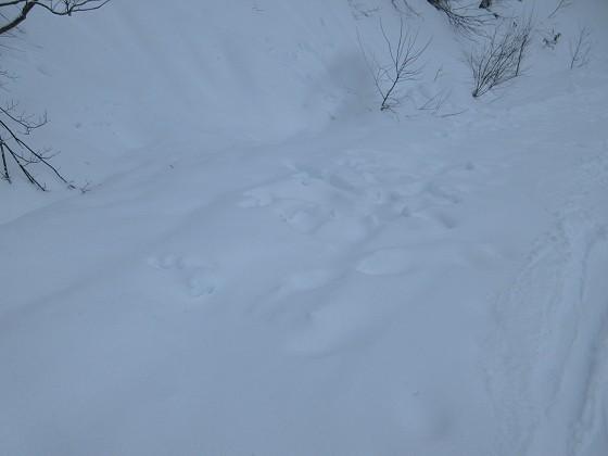 2020-01-30_0953_足元に降り積もる新雪がふんわりと5cmほど_IMG_2102_s.JPG