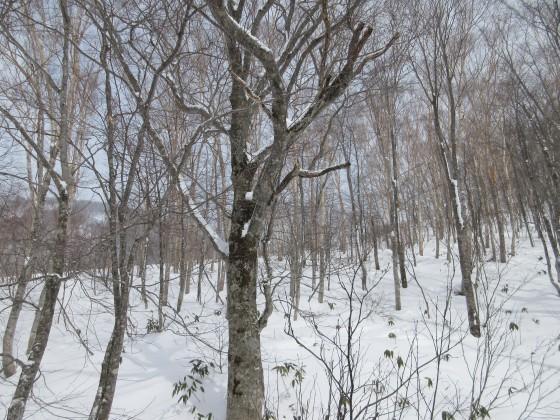 2020-01-30_1155_つが第2ペアリフトから見た栂の森ゲレンデ・一瞬雲切れ間から日差し_IMG_2116_s.JPG
