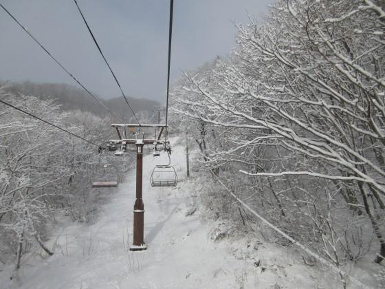 2020-01-31_0909_白樺クワッドリフト周辺の白くなった木々_IMG_2132_s.JPG