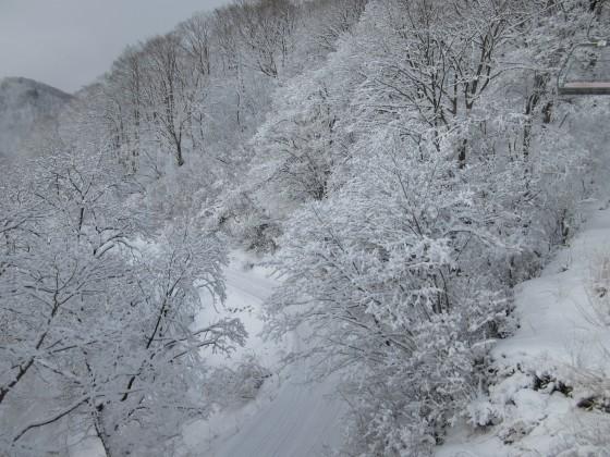 2020-01-31_0913_白樺クワッドリフト周辺の白くなった木々_IMG_2140_s.JPG