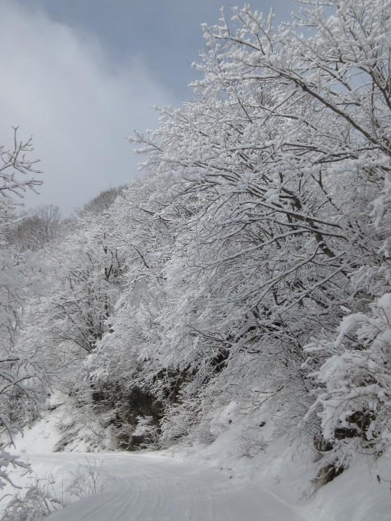 2020-01-31_0928_白樺ゲレンデからハンの木ゲレンデに通じる林道沿いの白くなった木々_IMG_2143_s.JPG