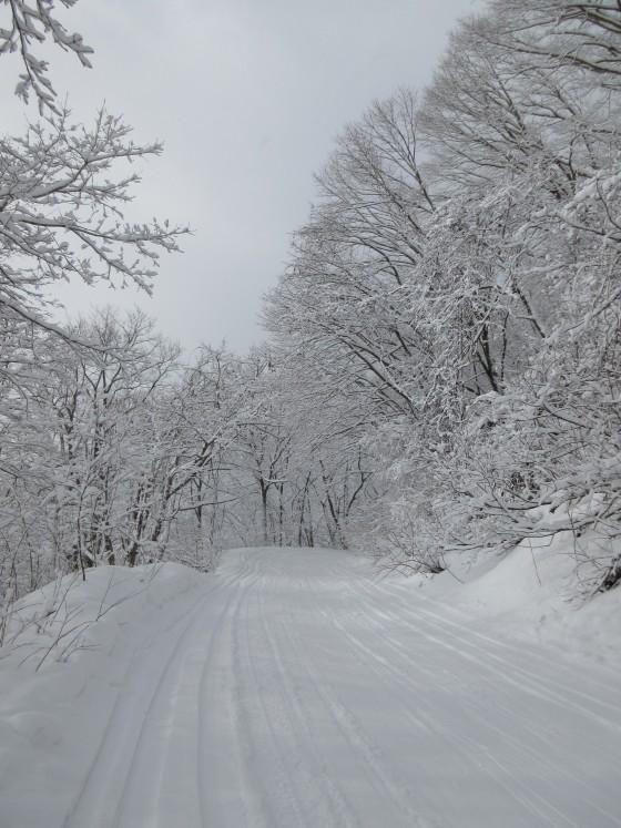 2020-01-31_0929_白樺ゲレンデからハンの木ゲレンデに通じる林道沿いの白くなった木々_IMG_2148_s.JPG