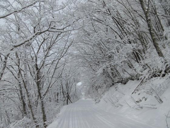 2020-01-31_0930_白樺ゲレンデからハンの木ゲレンデに通じる林道沿いの白くなった木々_IMG_2150_s.JPG