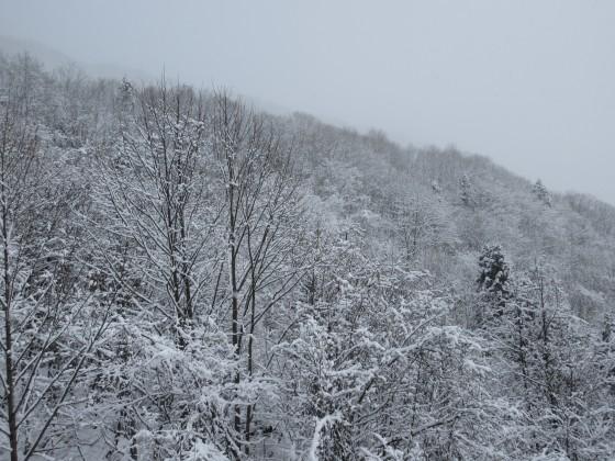 2020-01-31_1033_ハンの木第3クワッドリフトから見た白くなった木々_IMG_2154_s.JPG